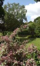 Beth Chatto Gardens (13)
