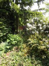 Beth Chatto Gardens (24)
