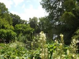 Beth Chatto Gardens (28)