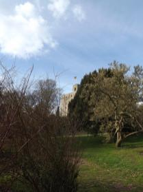 Hedingham Castle Snowdrops (54)