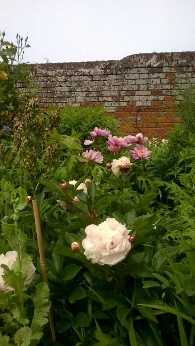 Feeringbury Manor Gardens (9)