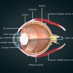 Human Eye Parts Diagram Massey Ferguson 175 Anatomy Of The Visual Acuity Light Perception Essilor Retina Choroid Sclera Iris Lens
