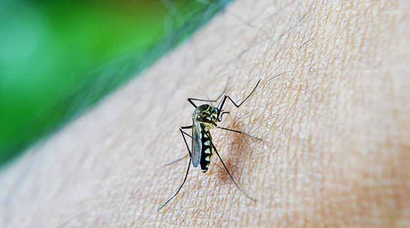 Prefeitura de Itanhaém inicia campanha de conscientização contra o mosquito Aedes Aegypti