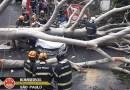 Queda de árvore mata mulher atingida dentro de carro em São Paulo