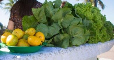 Produtores Rurais realizam drive-thru com alimentos saudáveis toda quarta-feira