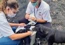 Animais de pessoas em situação de rua recebem atendimento veterinário em Praia Grande