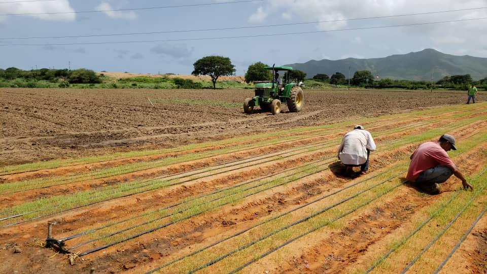 Ejecutivo regional apoya trabajo de campesinos en El Dátil