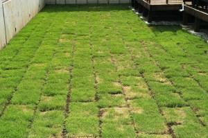 こだわりの土作りで元気な芝生