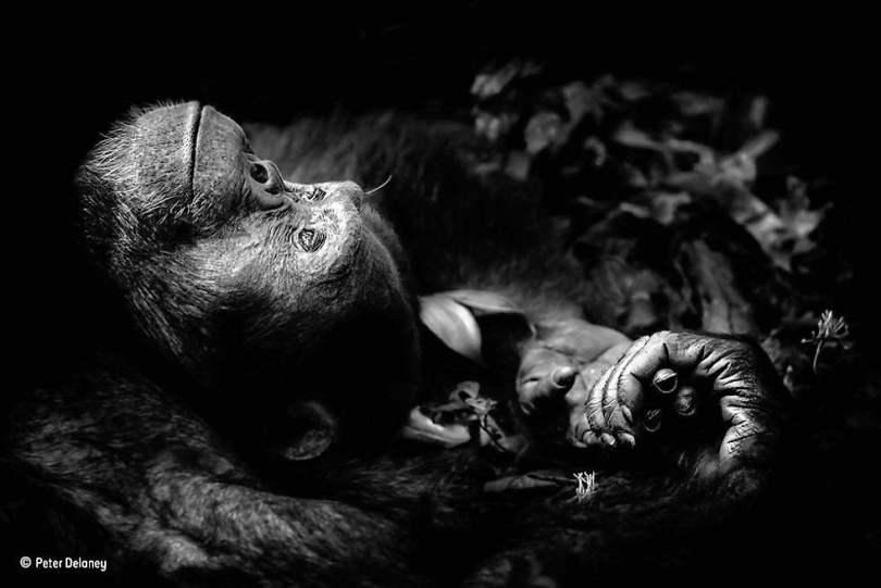 Peter Delaney. Retrato