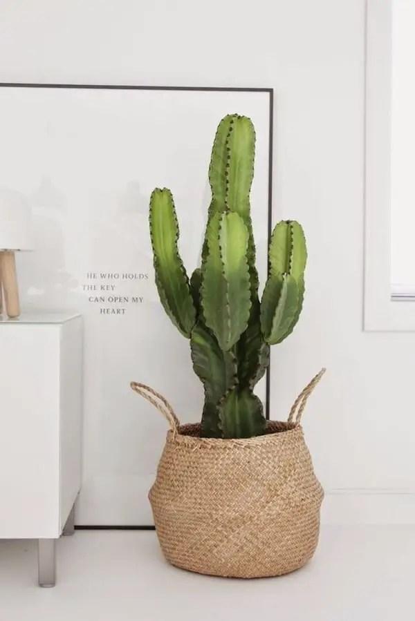 Cactus en cestas
