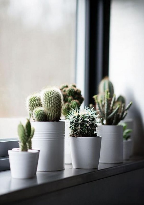 decoration windows with cactus