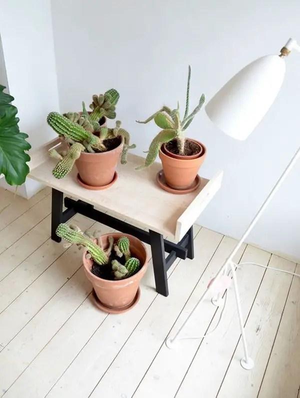 Recibidores decorados con cactus