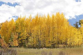 Aspen real estate 121116 146281 143 Meadow Ranch Road F 3 C 6 190H