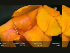 Los formatos gráficos digitales más utilizados