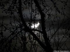 lua-conjunta-árvore