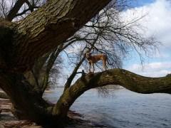 árvore-conjunção-cão-lenormand