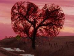 árvore-conjunção-coração-lenormand