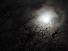 árvore-conjunção-lua