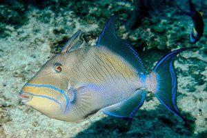 peixes-baralho-cigano