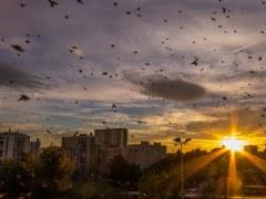 morro-conjunção-pássaros-lenormand