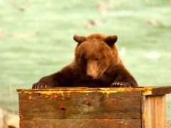 urso-conjunção-caixão-lenormand