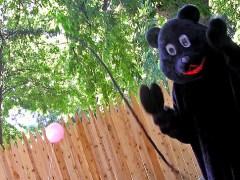 urso-conjunção-chicote-lenormand