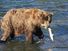 urso-conjunção-peixes-lenormand