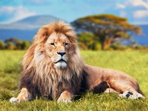 Resultado de imagen para imagenes leon