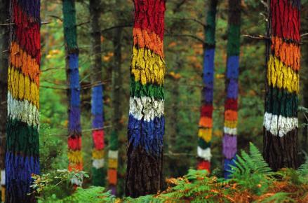 los-mejores-bosques-en-espana-para-perderse