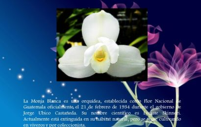 La Monja Blanca, Flor Nacional de Guatemala – parte 3