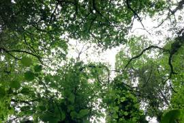 deforestacion un problema de todos