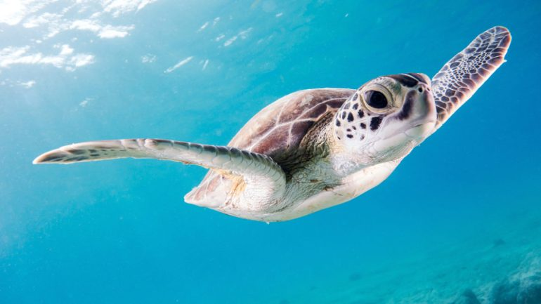 Biodiversidad tortuga