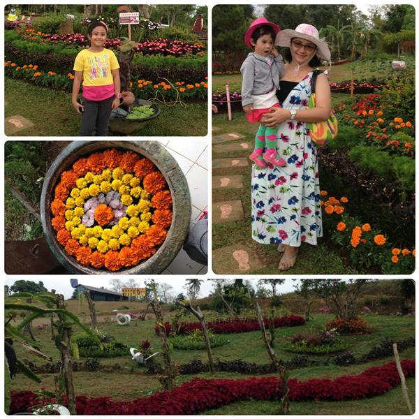 Paradizoo Flower Garden
