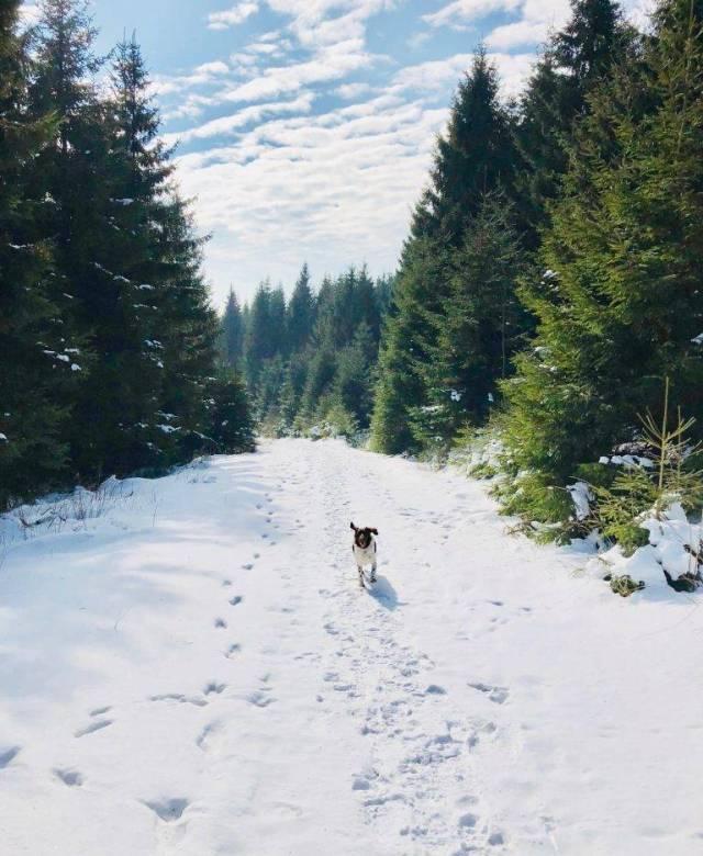Hund im Harz im Schnee