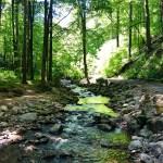 Harzer-Wandernadel – Ilsetal