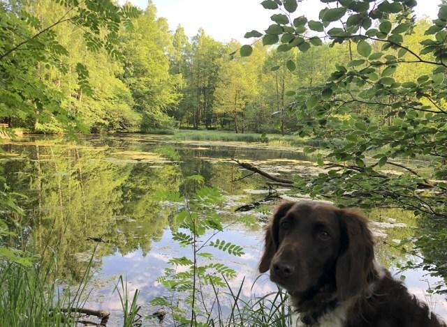 Hund am Teich im Harrz