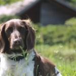 Teil 1: Wandern mit krankem Hund, oder: ein Hoch auf Lotte
