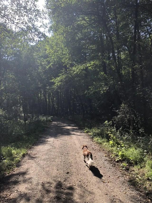 Wandern mit Hund auf dem Heidschnuckenweg
