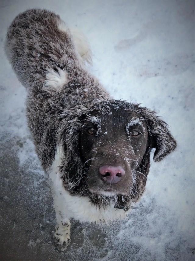 Hund auf Brocken