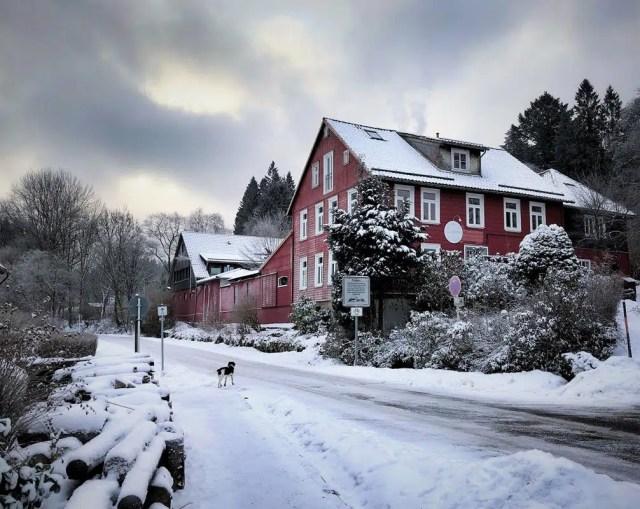 Buntenbock im Winter