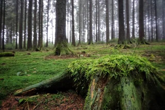 Wald im Rothaargebirge