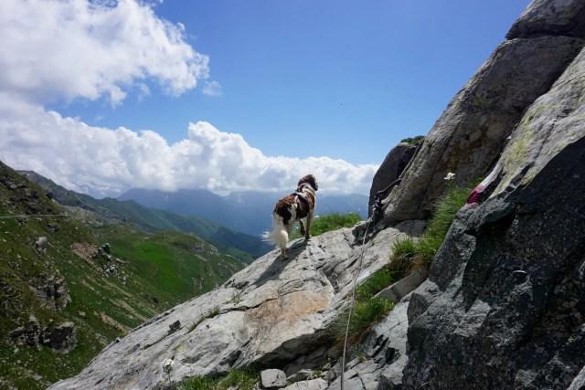 Hund Alpen