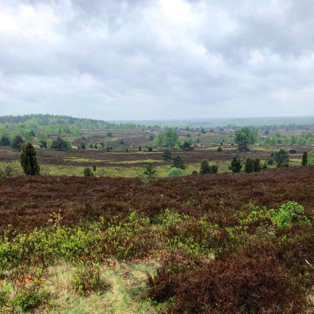 Blick über die Heide am Wilseder Berg