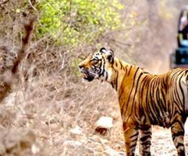 Discover wildlife of India
