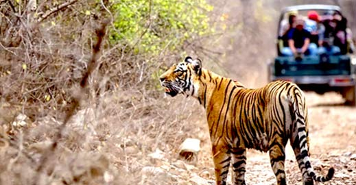 Discover wildlife of India