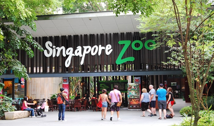 See the creatures roaming in the open zoo