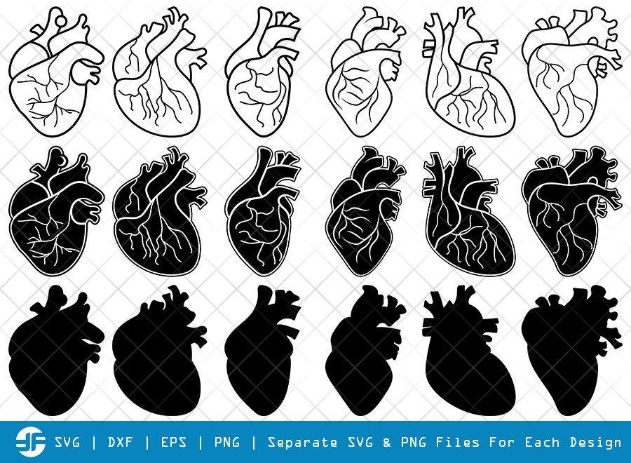 Human Heart SVG Cut Files | Anatomical Heart Silhouette