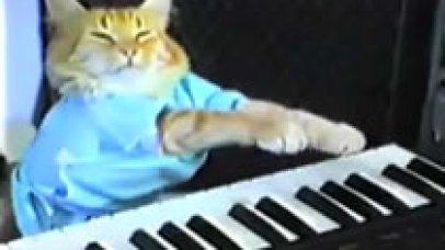 play-him-off-keyboard-cat_406x228