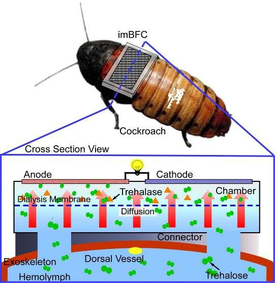 cyborg-cockroach-wireless-sensor-network