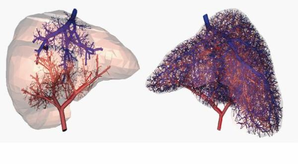 organs-41